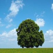 tree-1491526_640