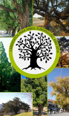 candidatos-arbol-europeo-2016-news