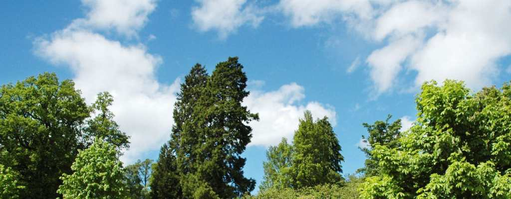 best tree for dayton landscape