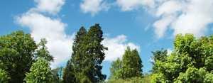 best tree for dayton landscape