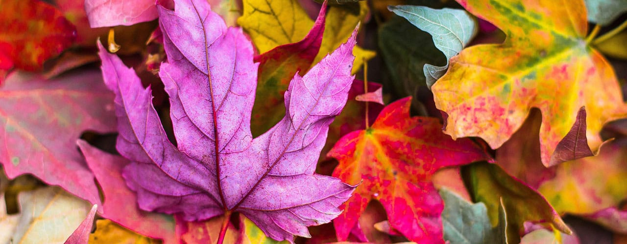 fall leaf colors