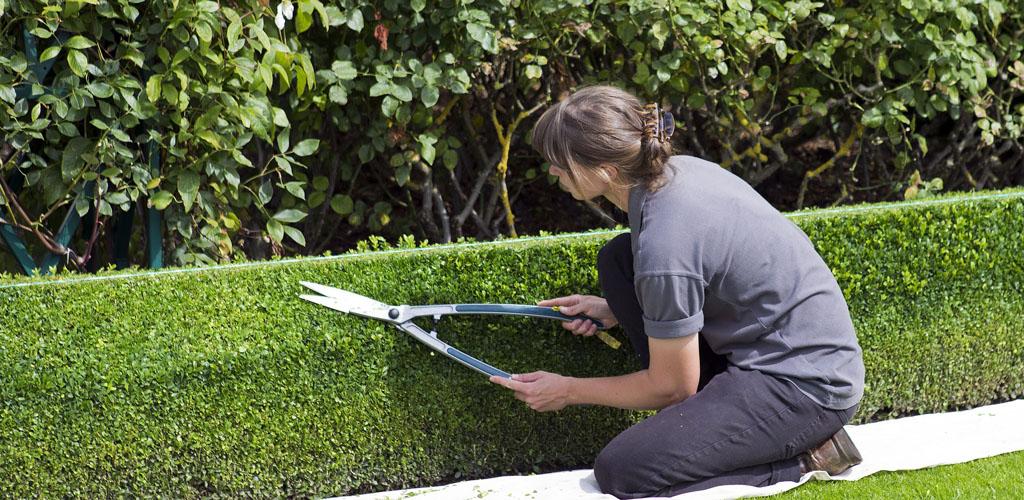 hedge layers