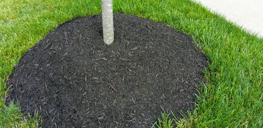 mulch volcano piled around a tree