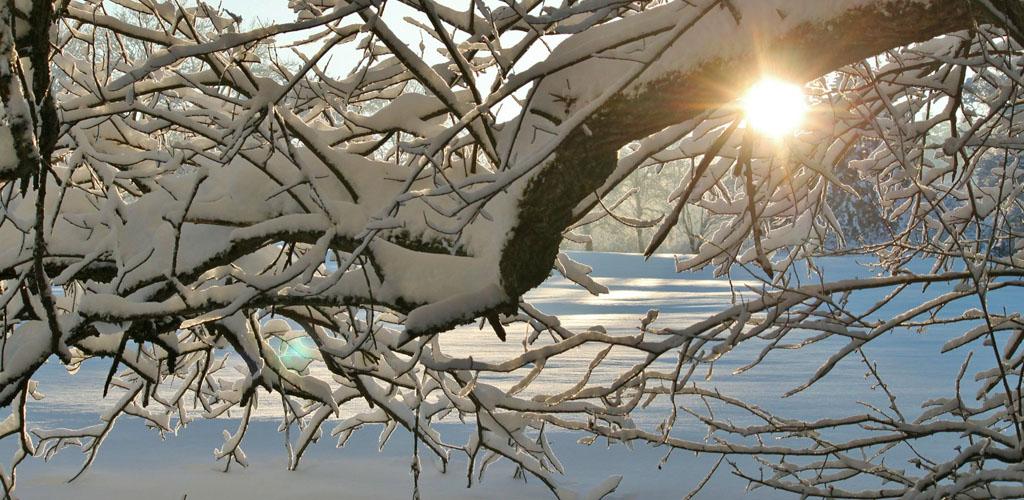 The winter sun shines through snow-laden branches in Dayton, Ohio