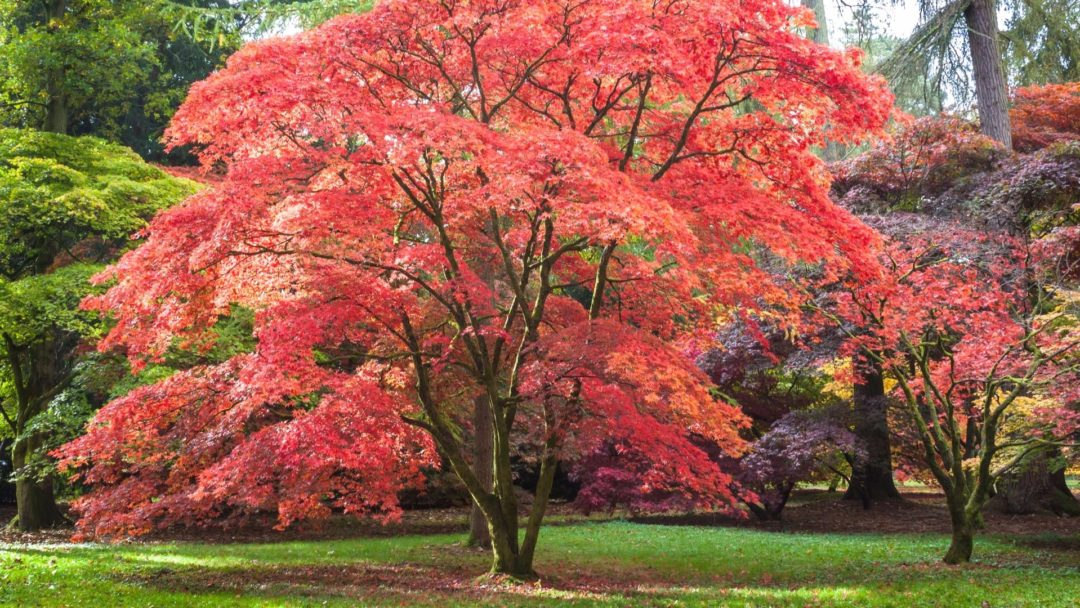 Small Trees Can Provide Shade Too Arbor Day Blog