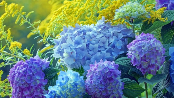7 fast-growing shrubs arbor day
