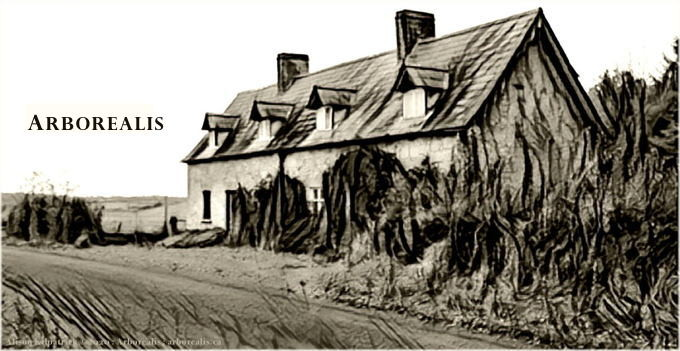 "Derrykintone cottage with ""Arborealis"" impressed upon the image; a logo for the site, appearing in the sidebar."