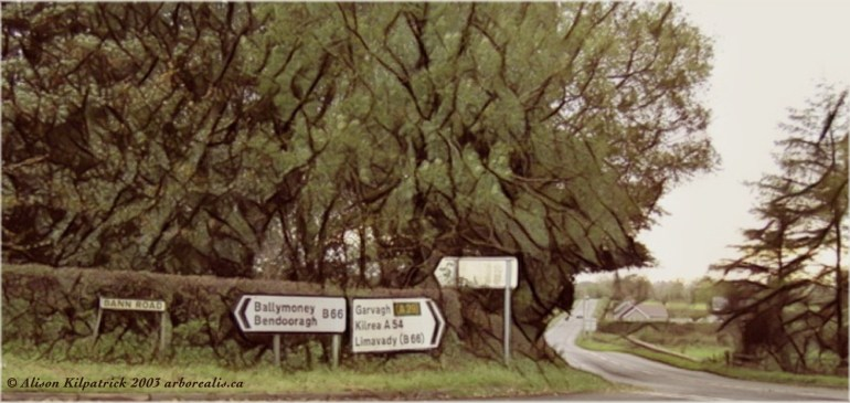 Signposts on the Bann Road, nine miles north of the town of Kilrea. Photograph copyright to Alison Kilpatrick, 2003.