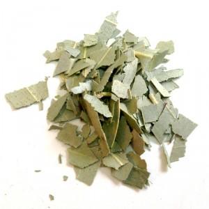 eucalyptus_bio_feuille