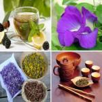 Plantes et tisanes biologiques
