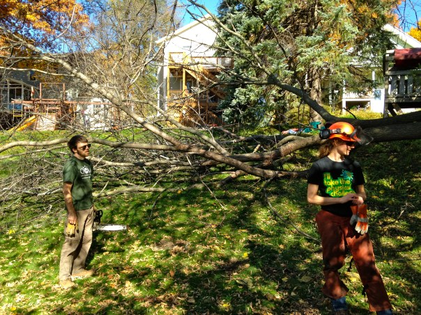 photo of two members cutting down elm tree.