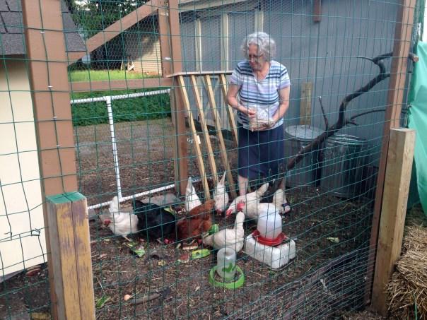 photo of woman feeding chickens.