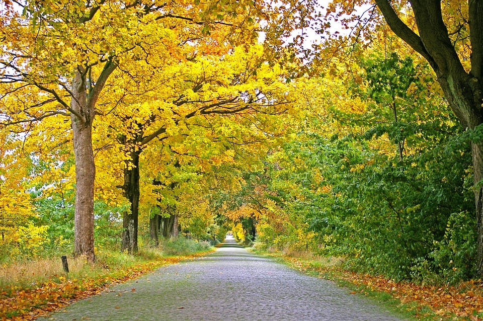 New England Fall Foliage Desktop Wallpaper Midwest Fall Planting Of Trees And Shrubs Arbor Hill