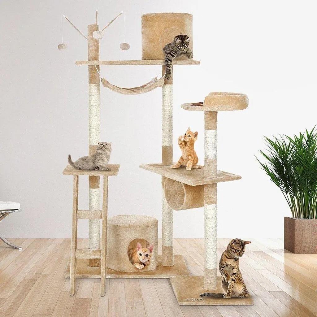 Plusieurs chats sur arbre