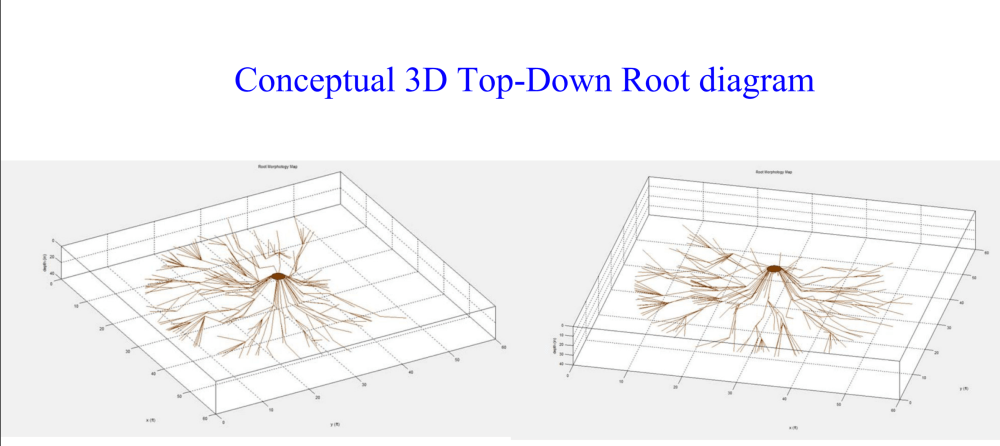 medium resolution of top down root diagram