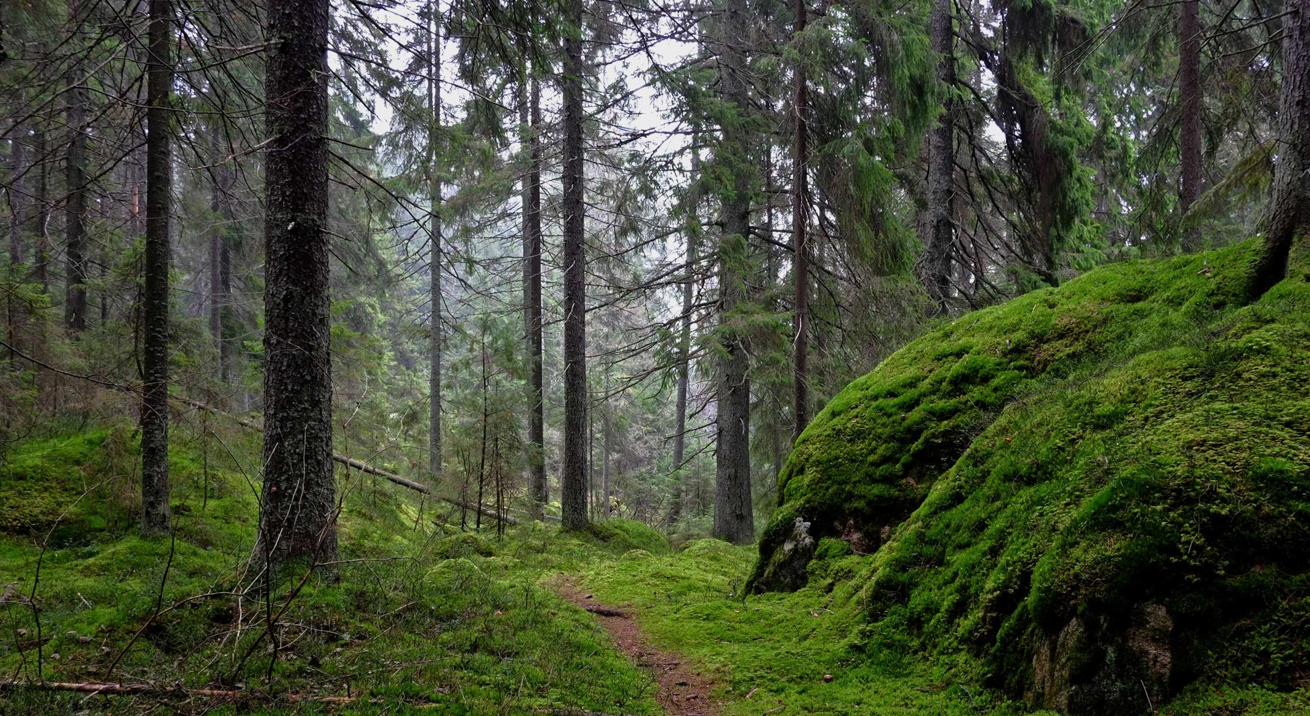 Trail Building Portfolio Items Arborscape Inc