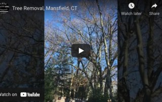 Tree Removal Mansfield, CT Video