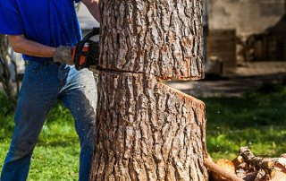 What to Look For in a Service for Tree Removal Near Me