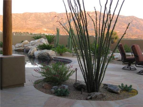 tucson saguaro cactus palm tree