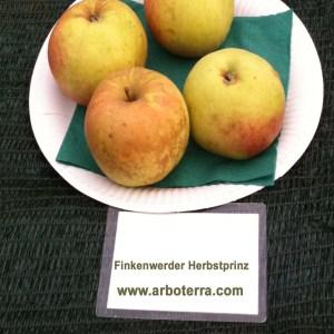 Finkenwerder Herbstprinz - Apfelbaum – Alte Obstsorten Arboterra GmbH