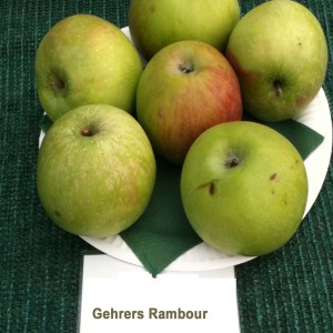 Gehrera Rambour - Apfelbaum – Alte Obstsorten Arboterra GmbH