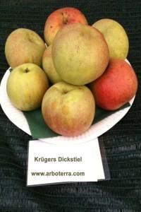 Alte Obstsorten Fruchtbilder Arboterra GmbH