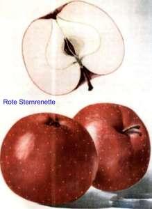 Rote_Sternrenette_ml