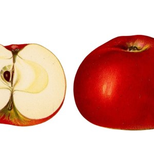 Aktion Apfel