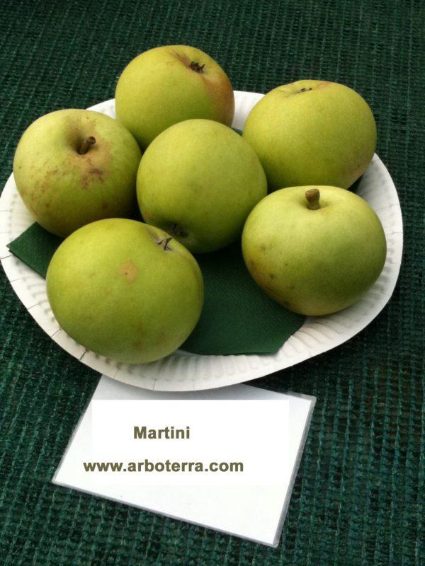 Martini - Apfelbaum – Alte Obstsorten Arboterra GmbH