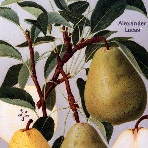 Alexander Lukas - Birnenbaum – Alte Obstsorten Arboterra GmbH