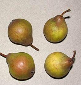 Naegelsche Birne - Birnenbaum – Alte Obstsorten Arboterra GmbH
