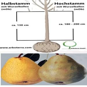 Birnenbaum (mit Wurzelballen / mDb)