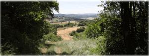 Chemin de forêt ombragé débouchant sur les champs