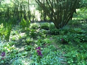 The beautiful bog garden
