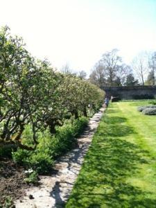 Espaliered apple trees, Parham, Walled Garden