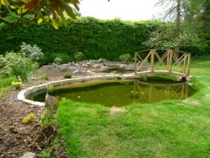 We returned a couple of months later to see how the pond had settled in