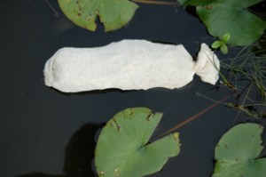 A clear water barley straw sack being used to inhibit algae growth in a pond