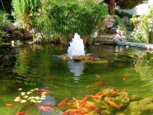 A healthy garden pond with water feature