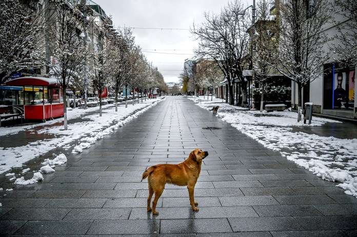 En Kosovo, un perro pasea por las calles vacías