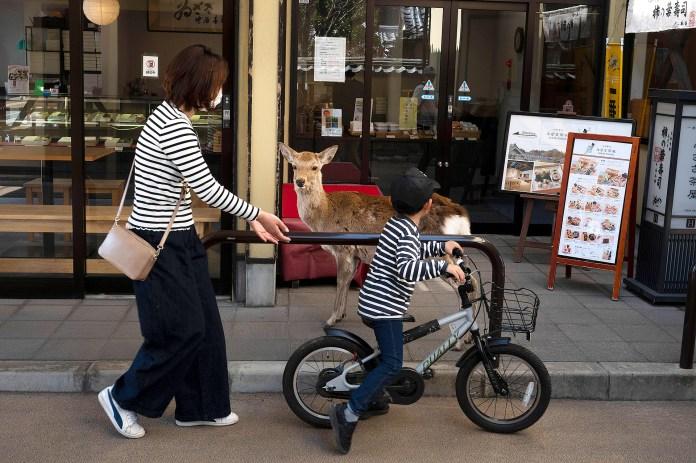 Un ciervo en las calles de Japón