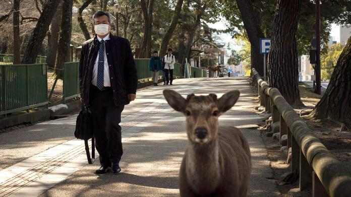 Japón ha sido el escenario de la aparición de muchos ciervos durante el brote de COVID-19, incluso pese a que el gobierno no restringió totalmente la circulación