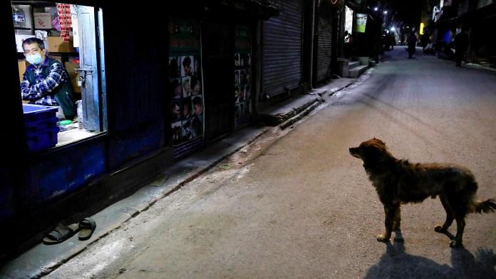 En Nepal, un perro pasea por las calles vacías