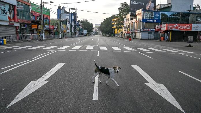 Un perro cruza la calle en Sri Lanka. Los animales son los únicos que circulan en momentos en los que la gente fue llamada a quedarse en sus hogares para evitar los contagios de COVID 19