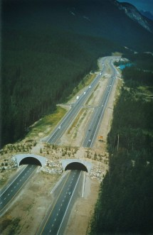 Solutions Wildlife Crossing Structures Arc