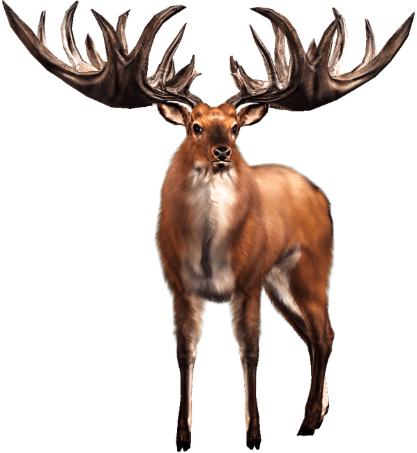 irelk_buck_idle
