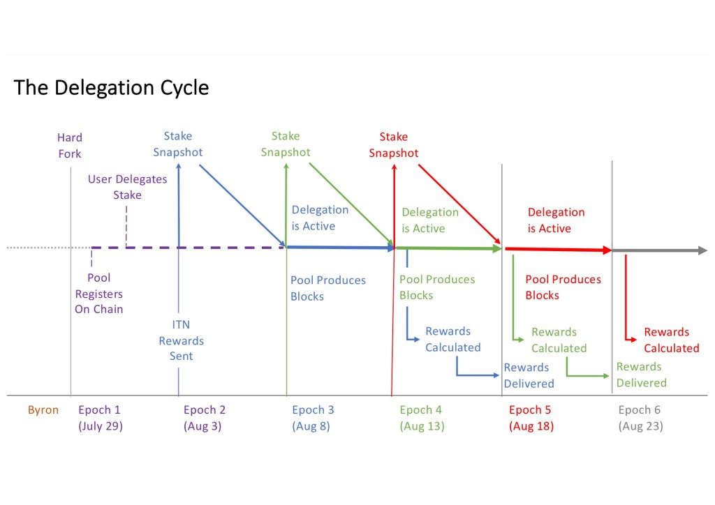 The Cardano delegation cycle