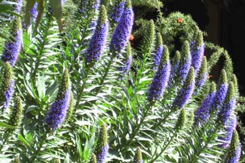 Landscape plant for September