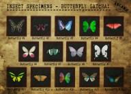 {A} Insect Specimen - Butterfly Gatcha Vendor
