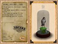 {A} Animal Specimen - Hawk