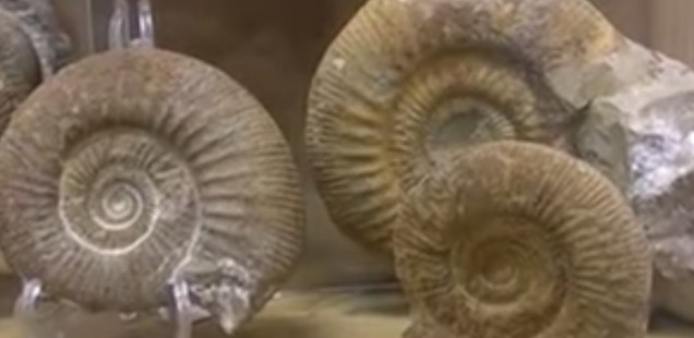 Over 1,000 Sea Fauna Fossils Showcased in Natural History Museum in Bulgaria's Plovdiv